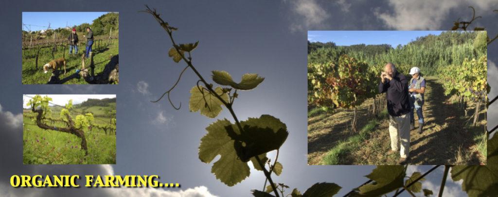 Organic Farming Wine